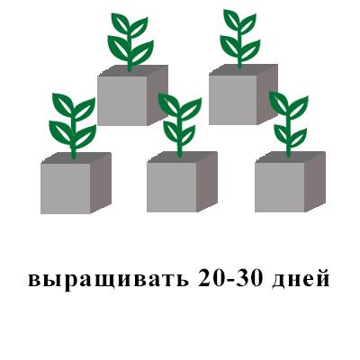 агровата серая 20-30 дней.jpg