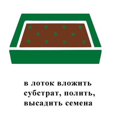 в лоток вложить субстрат, полить, высадить семена.jpg